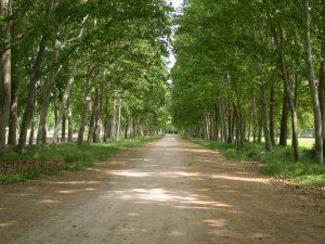 Paseos históricos, Picotajo
